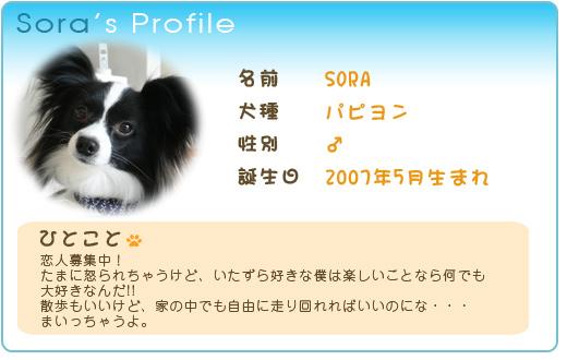 sora's Profile